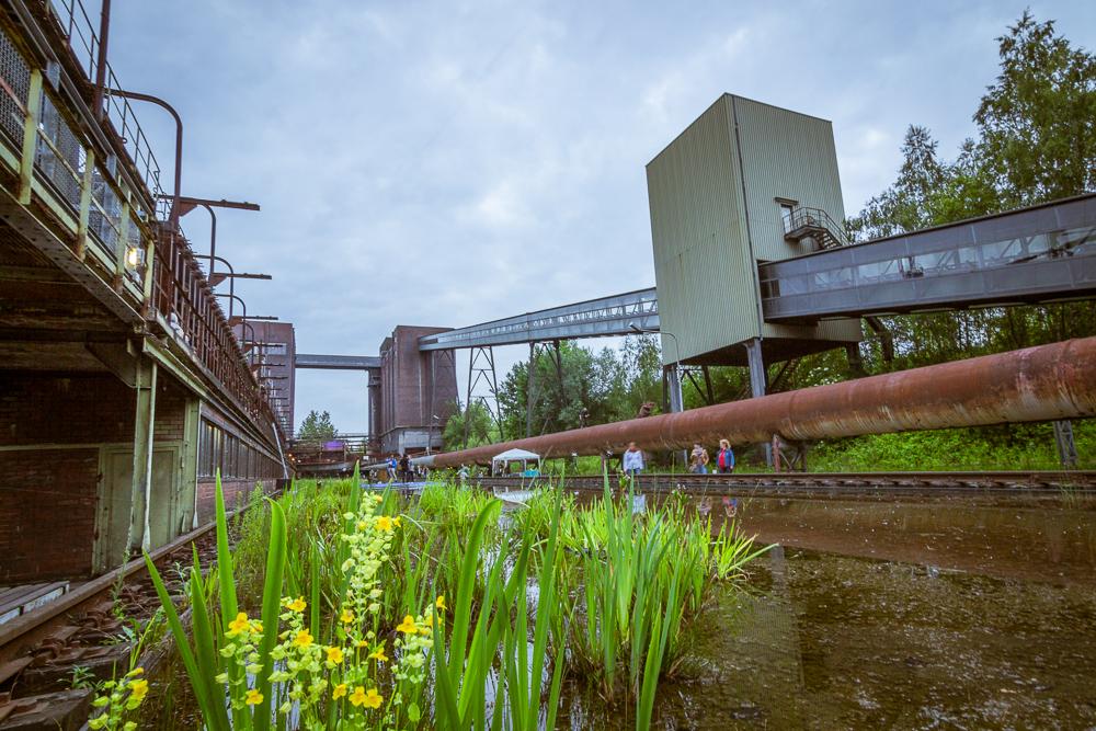 Kokerei Hansa , Extraschicht 2015 , Koksofen-Batterie, Förderband , Wasserbecken , Bassin , Pflanzen
