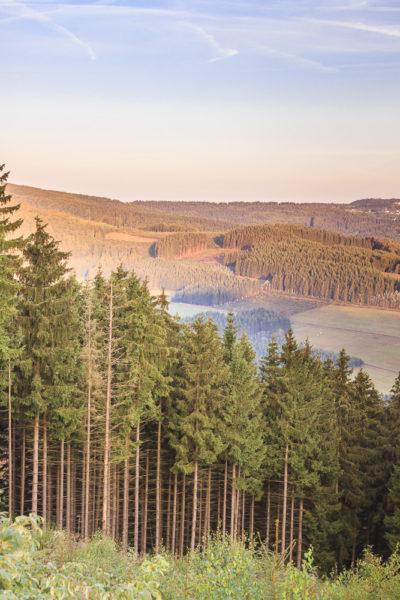 Hochkantpanorama über Winetrberg Bei Sonnenaufgang