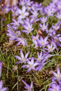 Frühling in Gevelsberg