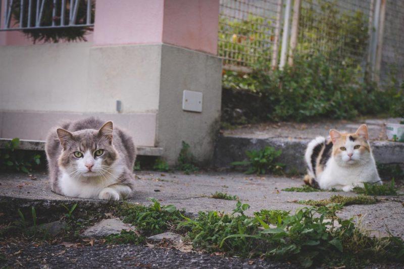 Bogliasco_streetphotography-014