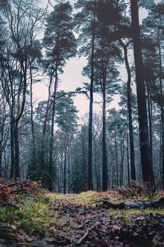 Waldweg bei stürmischen Wetter