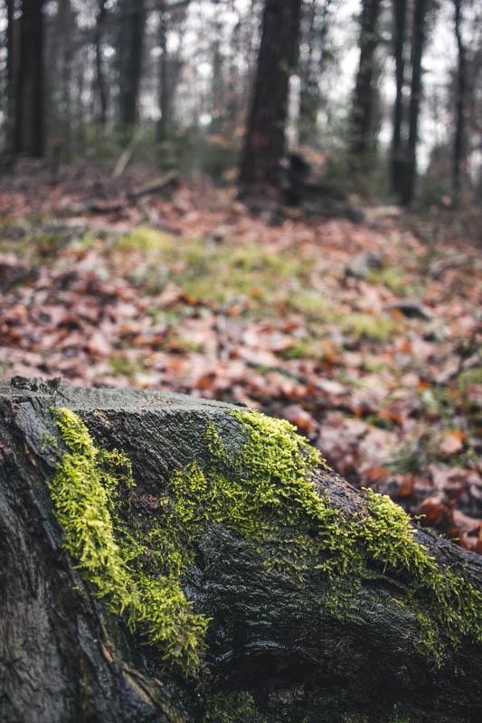 Bei Regen im Wald fotografieren - Ein Baumstumpf ist auch ein Motiv
